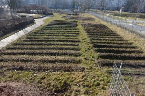 Beete im Saatgutgarten